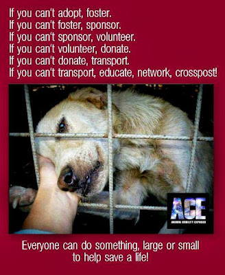 Adopt Foster Rescue a Shelter Dog. Please be a hero and help stop Shelter killing and Puppy Mill industry
