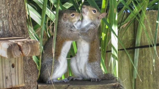 Cute Young Squirrels Playing