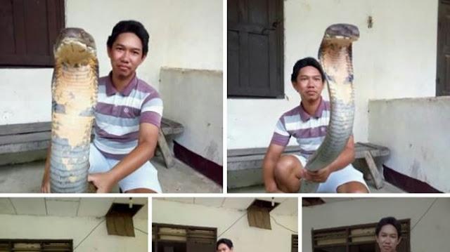 Ternyata Ini Sosok Pria Yang Berhasil Takhlukkan King Cobra Raksasa Hutan Kalimantan