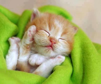 Gatito dormido frazada verde
