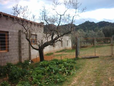 los olivares ,camino ,pantano de Pena, Beceite, Beseit, caseta, bloques, almendros