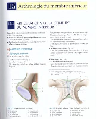 Télécharger Livre Gratuit ANATOMIE - Membre Inférieur - Arthrologie du MI pdf