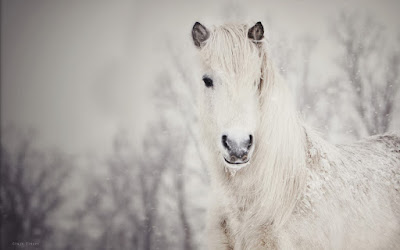 beauty-horse-winter-snow-photo-wallpaper-1920x1200