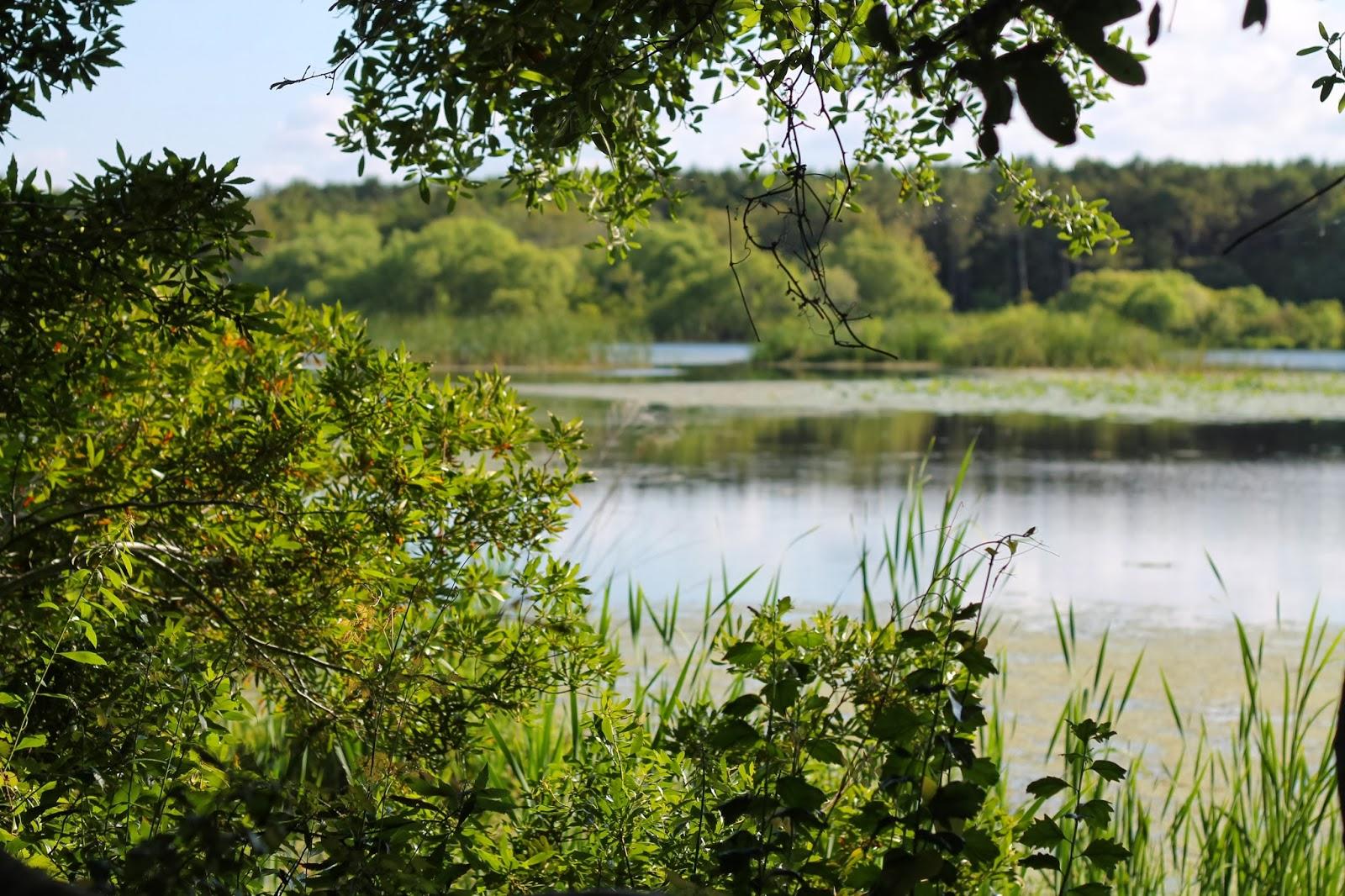 mitcheci photos: South Carolina Gator Country: Swampy lands