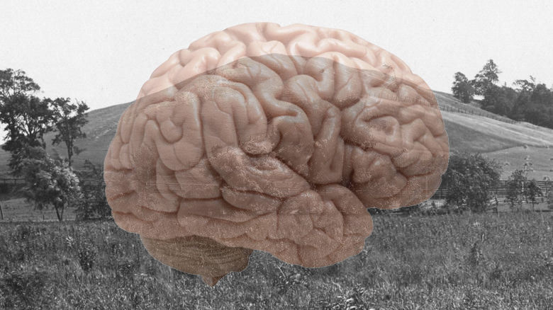This is your brain on the Heartland theory