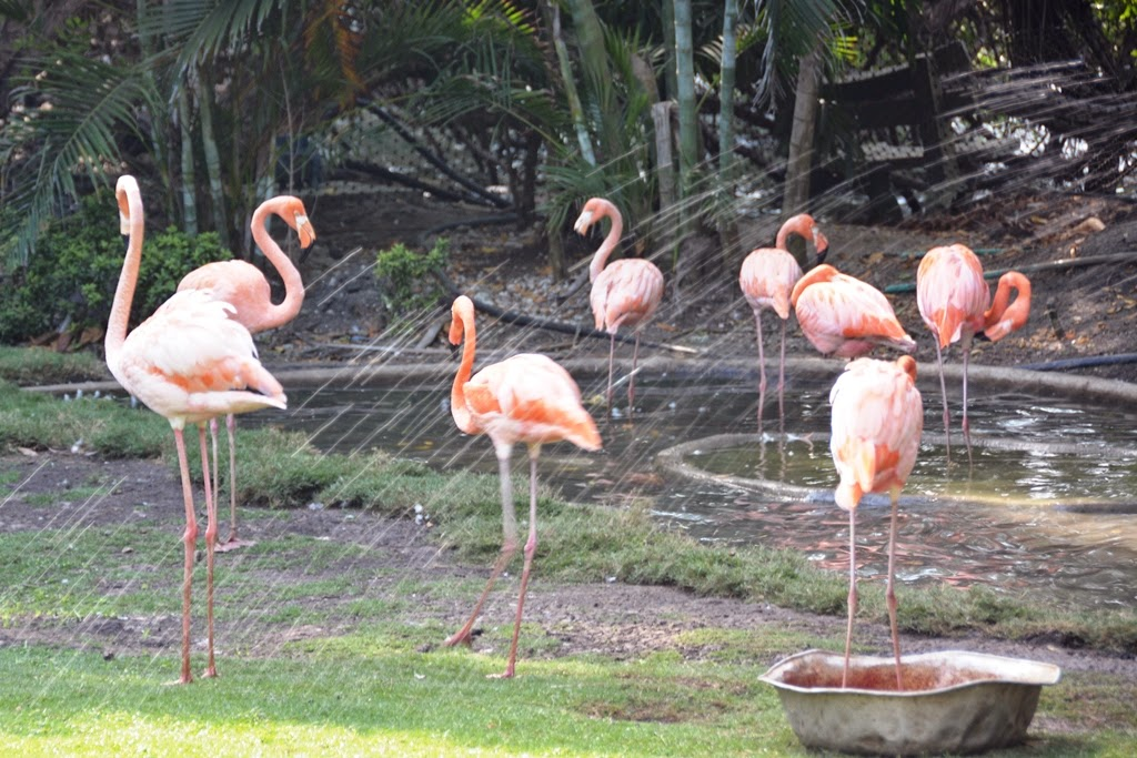 Port of Cartagena des Indes flamingos