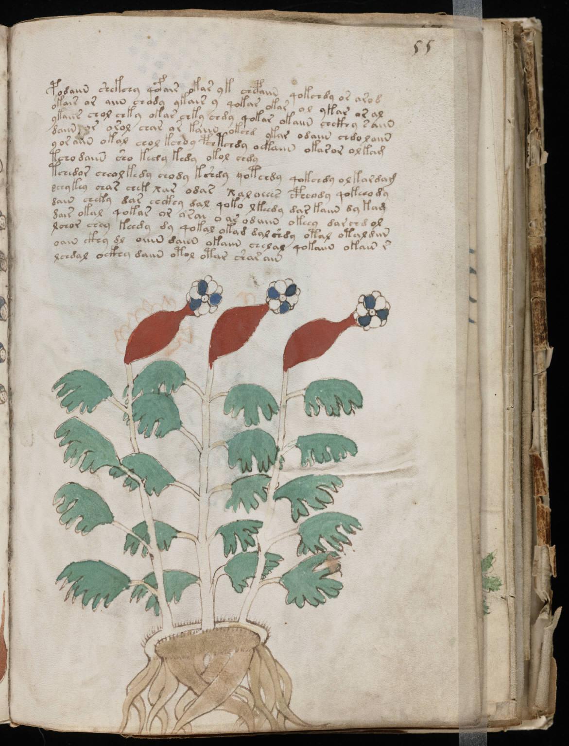 manuscrito107