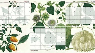 El 'realismo mágico' de los dibujos de Mutis vuelven a ilustrar el calendario del Real Jardín Botánico