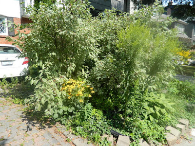 Toronto Deer Park summer garden cleanup before by Paul Jung Gardening Services