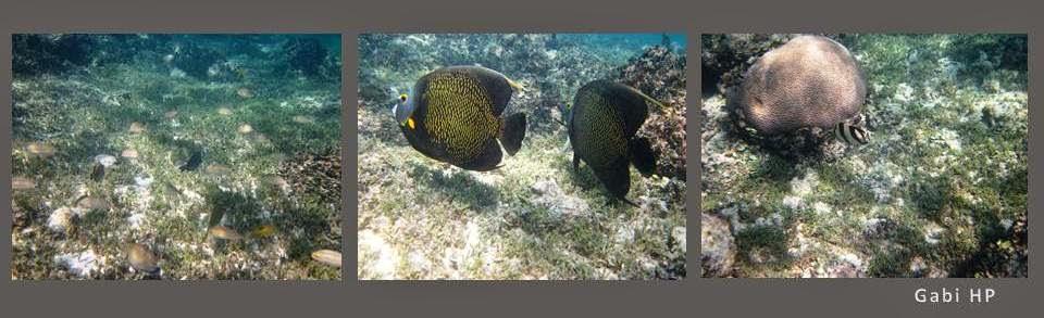 Gabi HP - Snorkel em Abrolhos