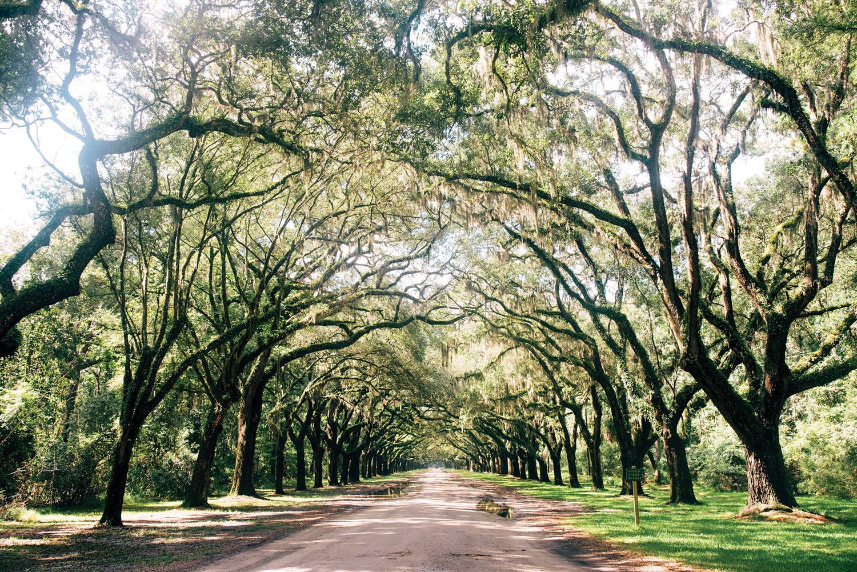 Savannah - thành phố bí ẩn dưới rừng sồi -3