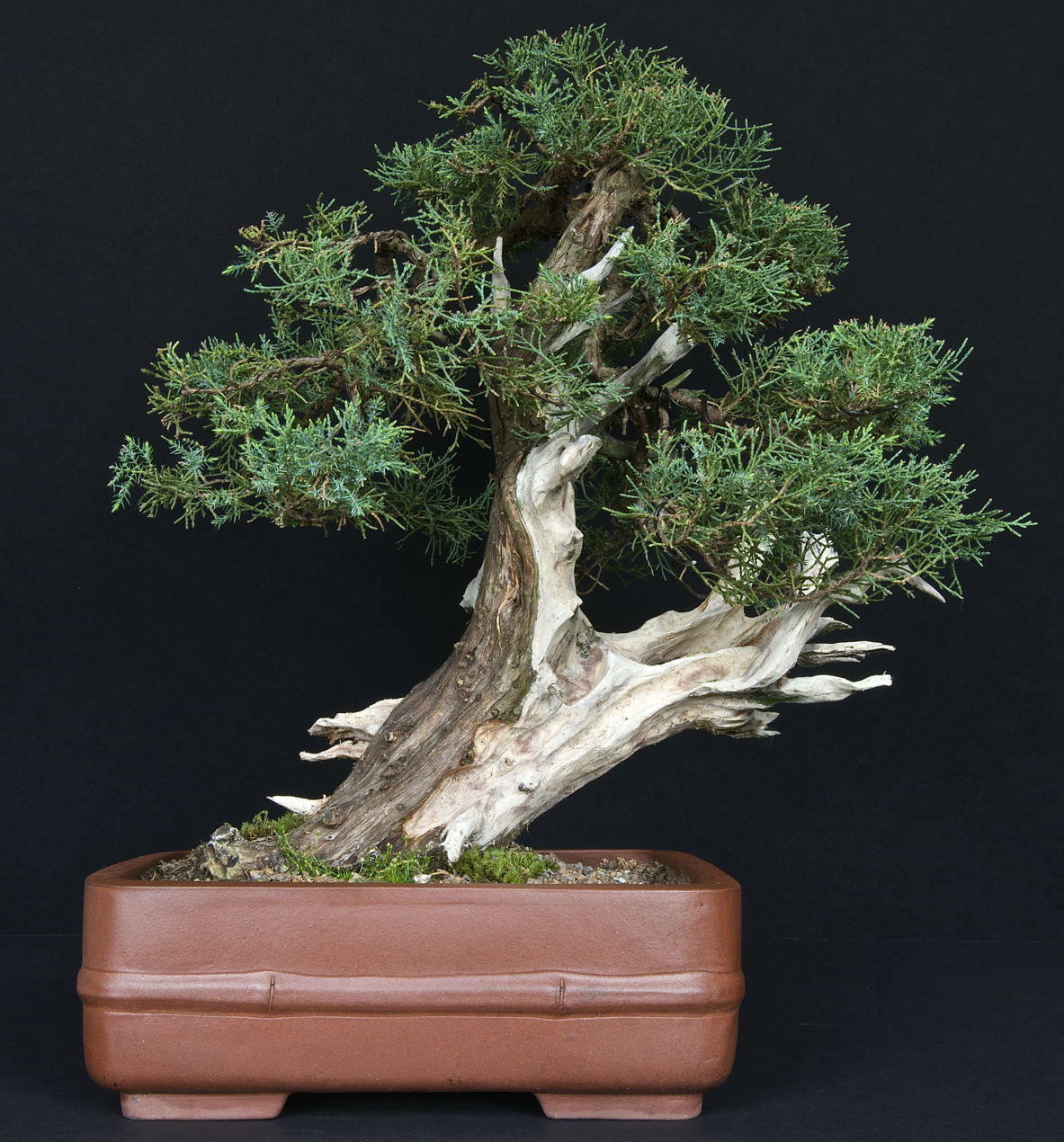 Akron Canton Bonsai Society Creating A Bonsai From A Trunk With