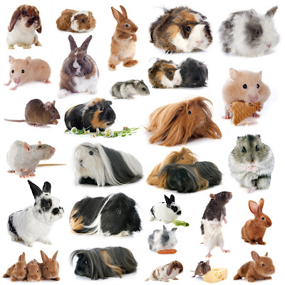 All common rodents from the United Kingdom.