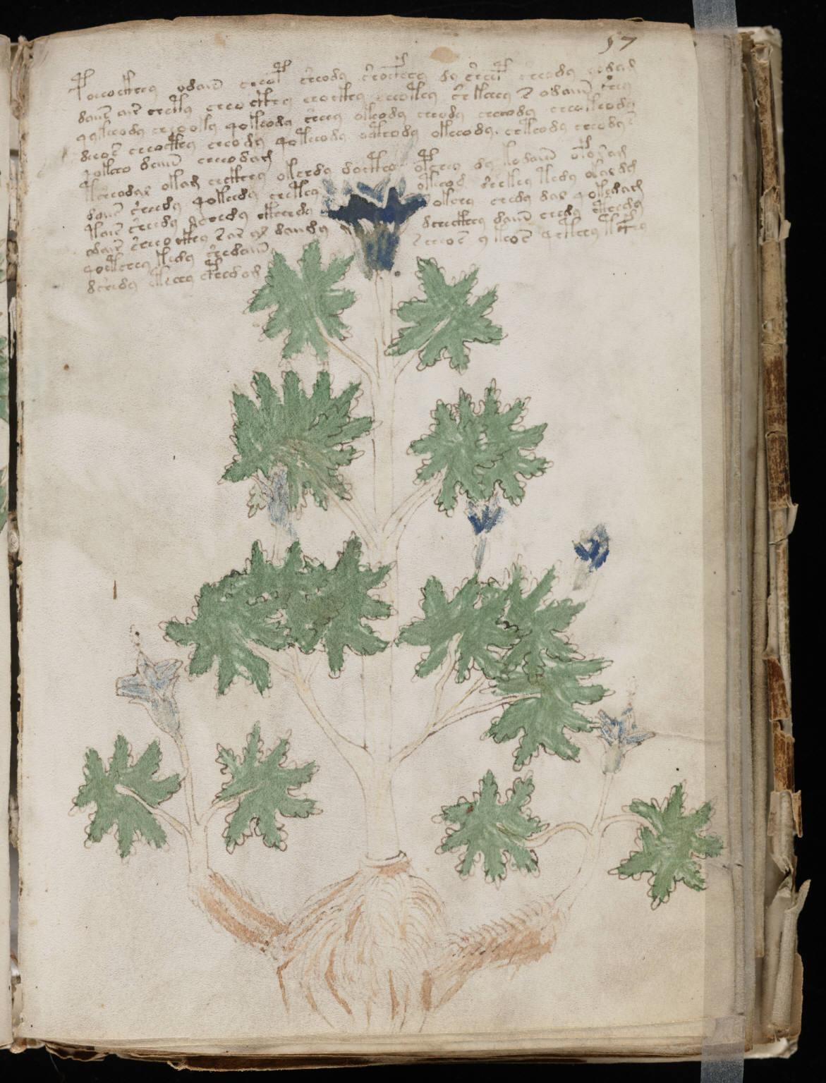 manuscrito111