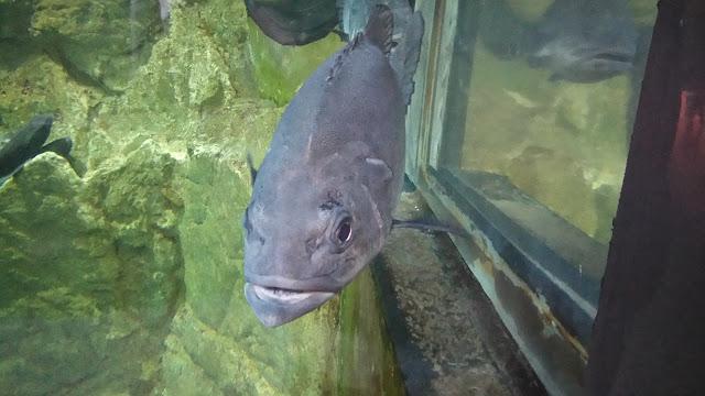 poisson, ocearium, aquarium, croisic, bullelodie