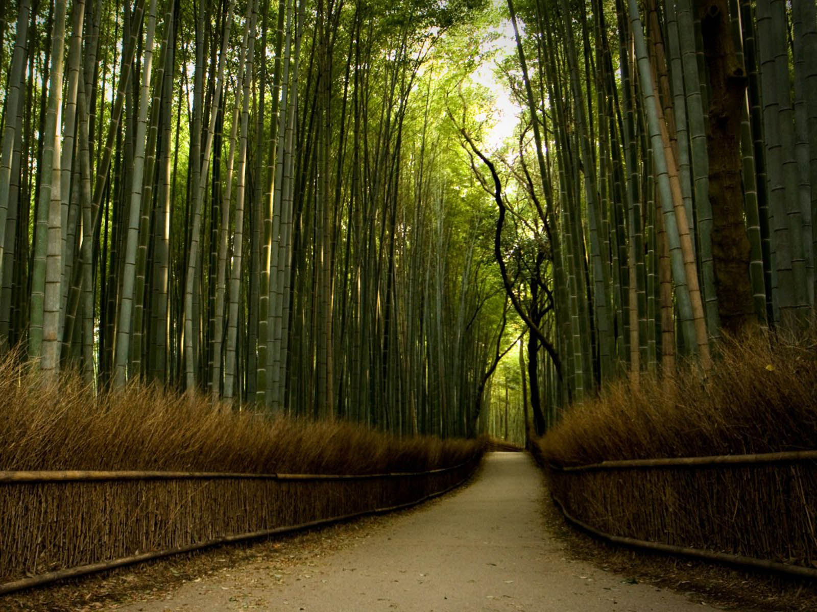 Windows 7 3d Desktop Wallpapers Free Download Wallpapers Bamboo Forest Wallpapers