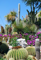Desert-plants-landscaping