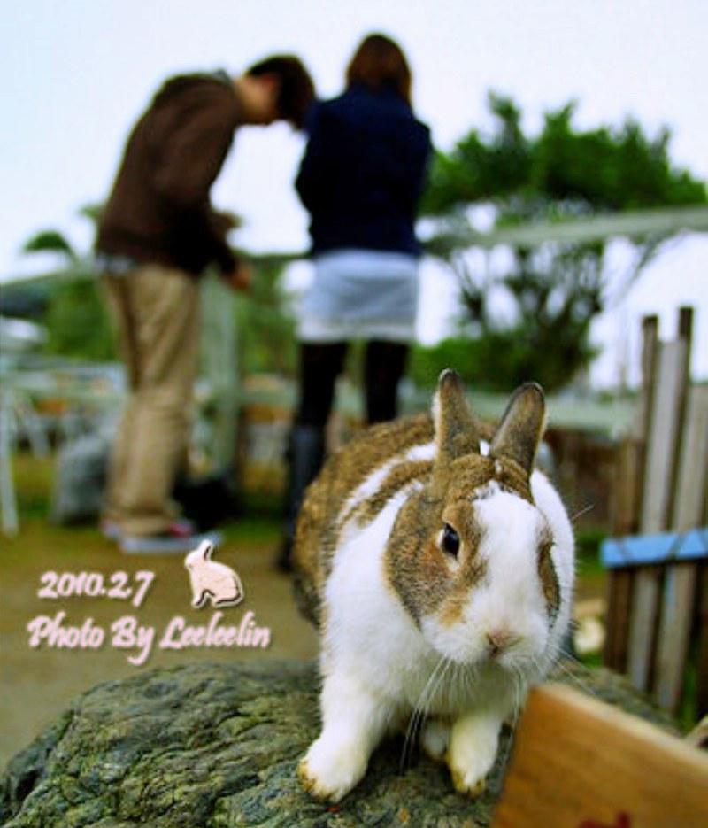 新北八里寵物親子餐廳|TO House兔子庭園餐廳~孩子歡樂天堂