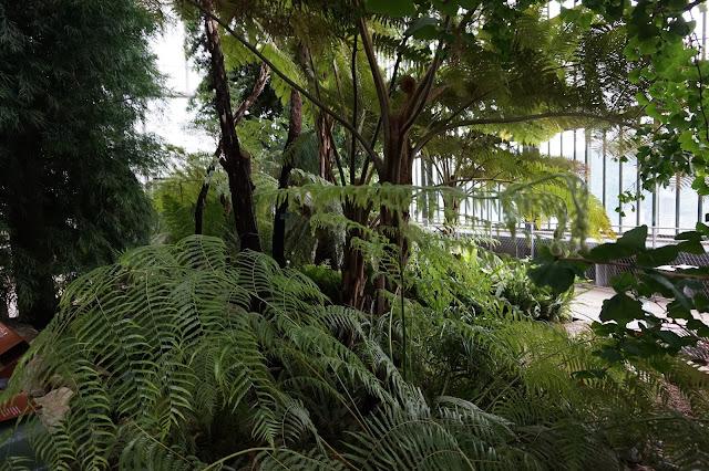 Jardin des Plantes - Serre de Nouvelle-Calédonie