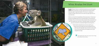 Koala Hospital photograph inside book