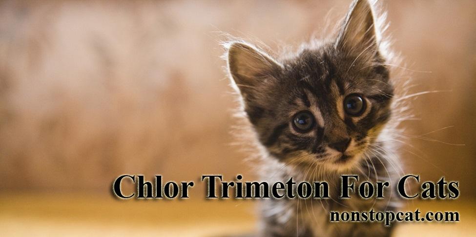 Chlor Trimeton For Cats