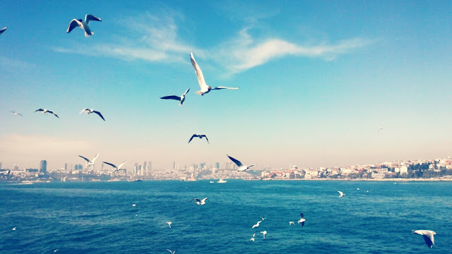 Чайки Босфора, Стамбул, Турция.