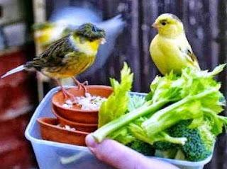 Dengan Memberikan Jenis Pakan Tambahan Berupa Ef Sayuran