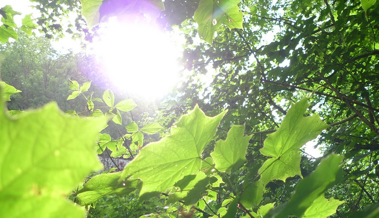 Lição de ciência para  os loucos do aquecimento global - Quase toda a vida vegetal depende da fotossíntese, o que requer o dióxido de carbono