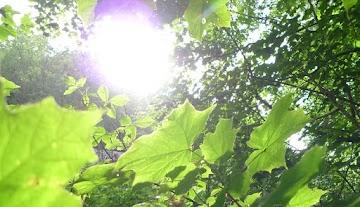 Lição de ciência para  os loucos do aquecimento global - Quase toda a vida vegetal depende da fotossíntese