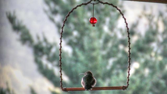 Hummingbird Swing Perch