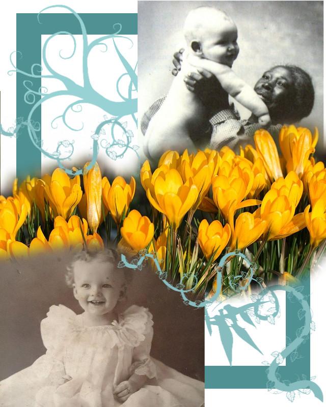 La flor de azafrán amarillo - Laila Ibrahim