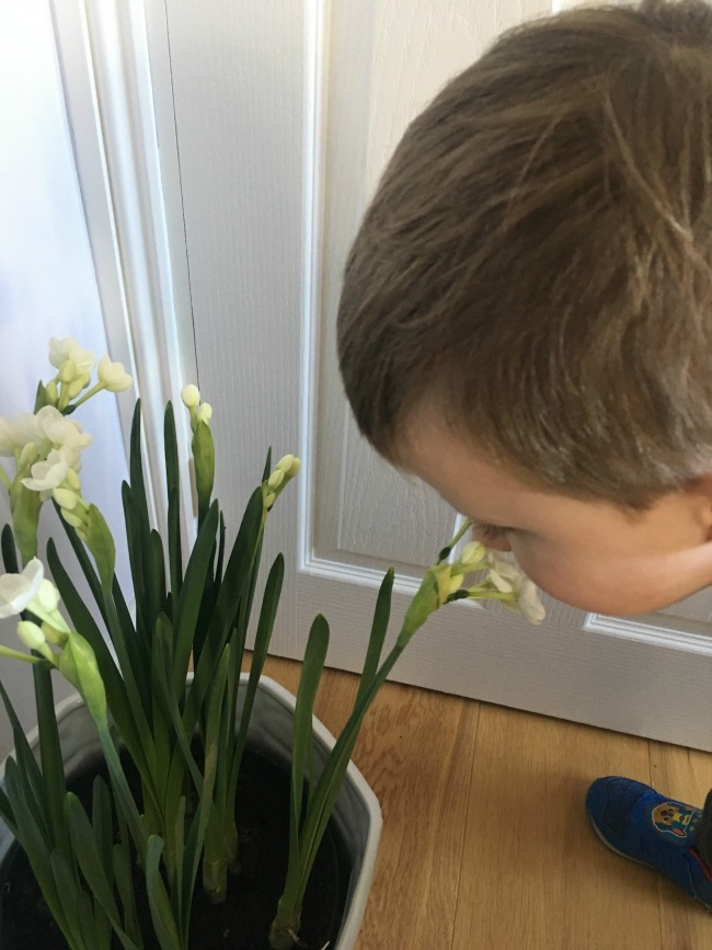 toddler-smelling-the-sweet-scent-of-paper-whites