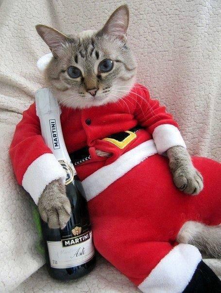čestitke za božić vicevi Svaštara   Smiješne Slike   Vicevi   SMS: Božićna maca čestitke za božić vicevi