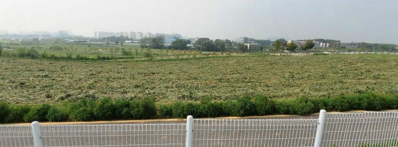 당신이 잠든 사이에 : 안성팜랜드 (Anseong Farmland) - 다음 지도