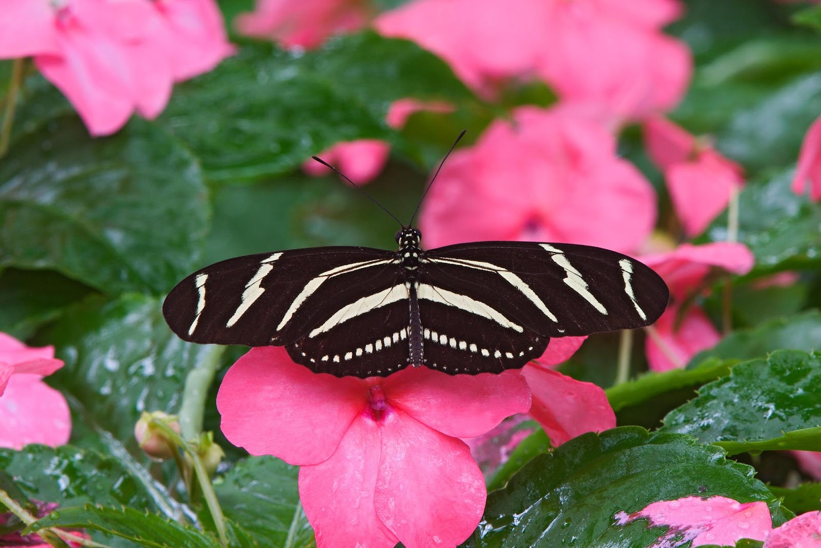 Some Cute Baby Wallpapers The Most Beautiful Butterfly Wallpapers Most Beautiful
