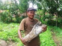 Warga Blora Temukan Tulang Betis Gajah Purba
