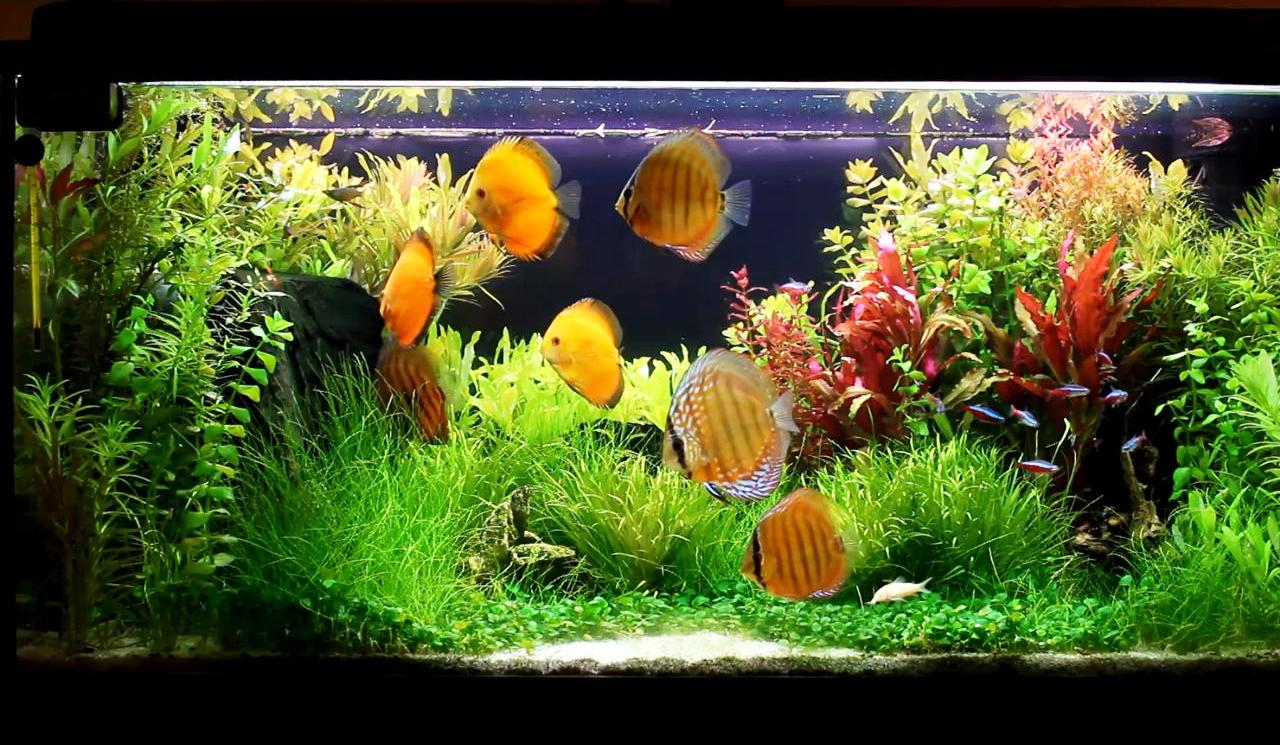 How To Start A Freshwater Aquarium Part 1 Feast Your Eyes