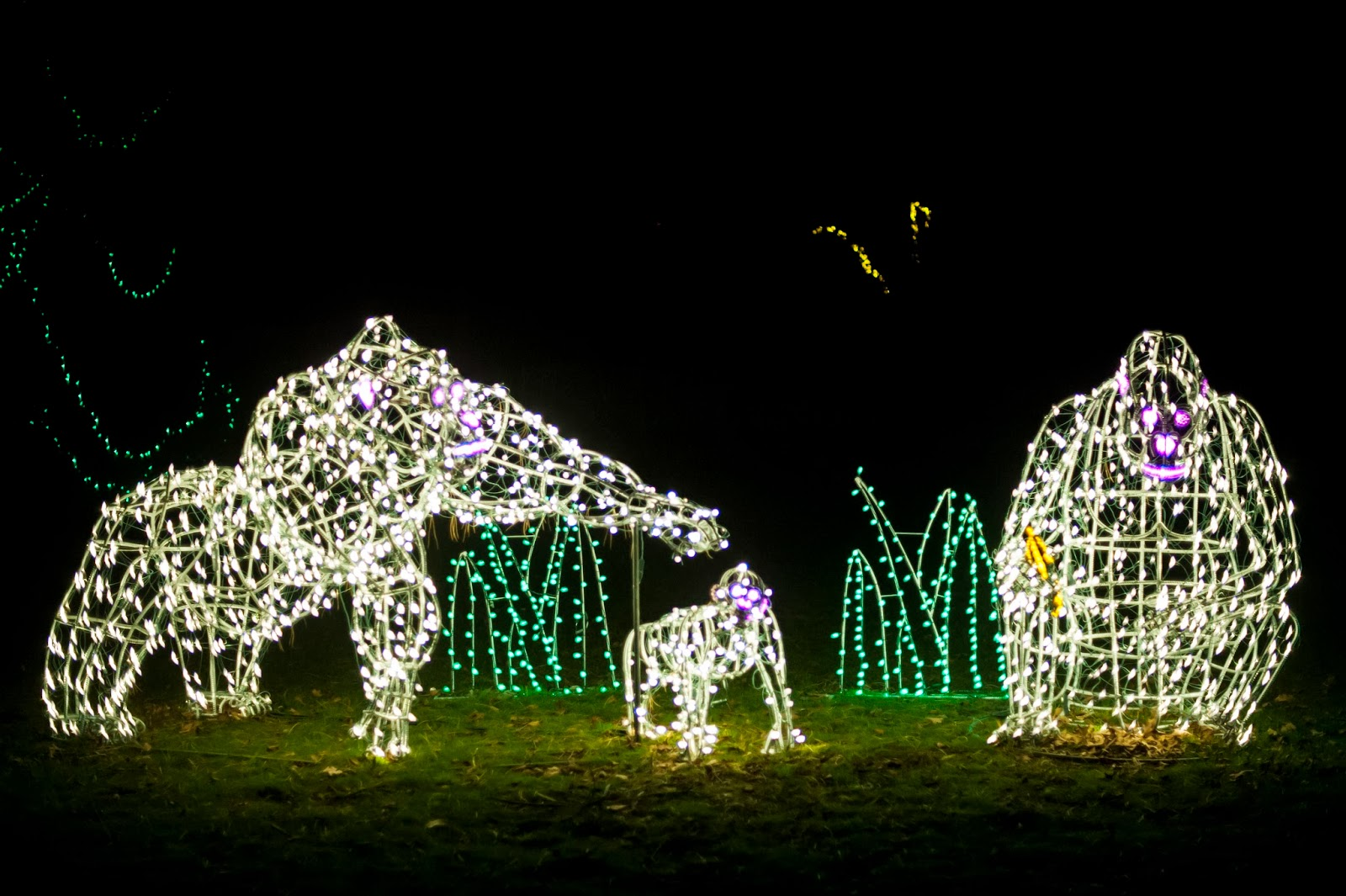 Zoo Lights Woodland Park Zoo