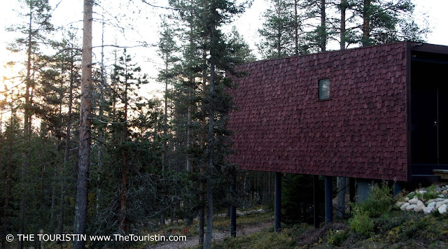 forest sunrise trees design hotel