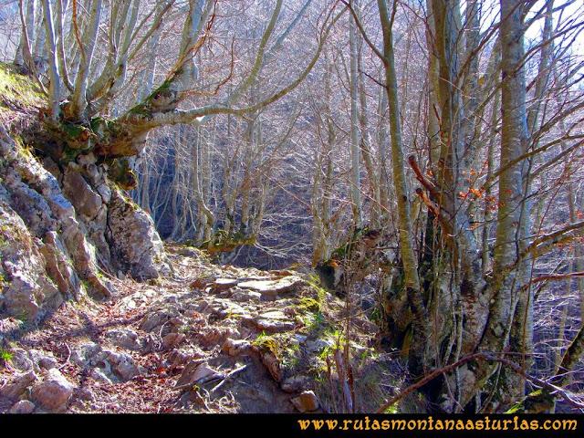 Ruta Requexón Valdunes, la Senda: Atravesando el bosque