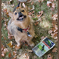 Ziwi Peak Air-Dried Dog Treats review