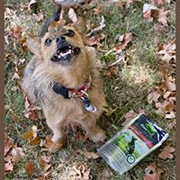 Ziwi Peak Air-Dried Dog Treats review