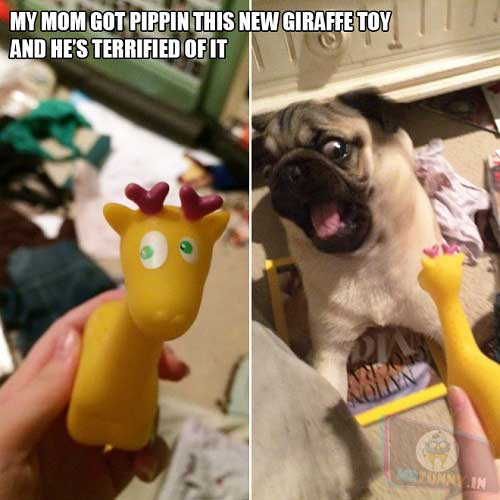 Pug vs. Giraffe Toy