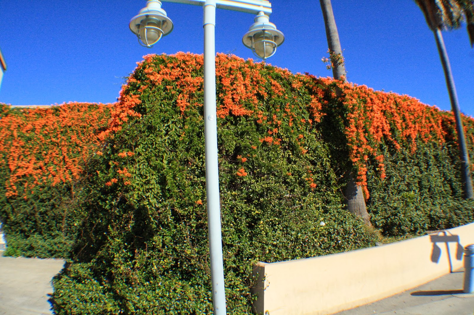 Kevin Songer Florida Green Roof And Living Wall Plant