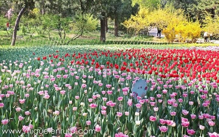 Jardines-Jingshan-Park