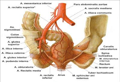 Ligasi Arteri Hemoroid