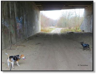 jetzt geht es durch den Tunnel