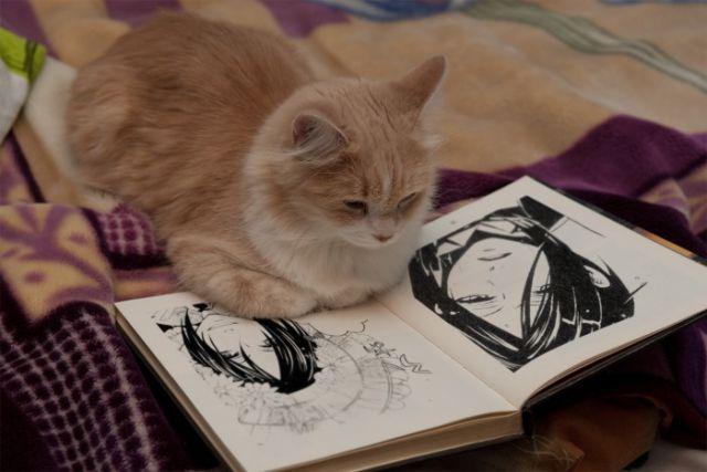 Cat Reading Books 7 Images