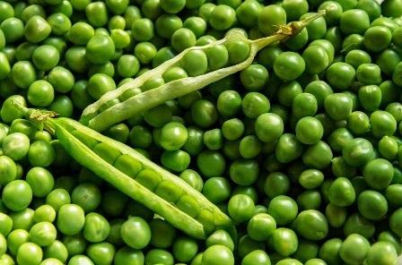 Image result for Manfaat Kacang Polong Untuk Ibu Hamil