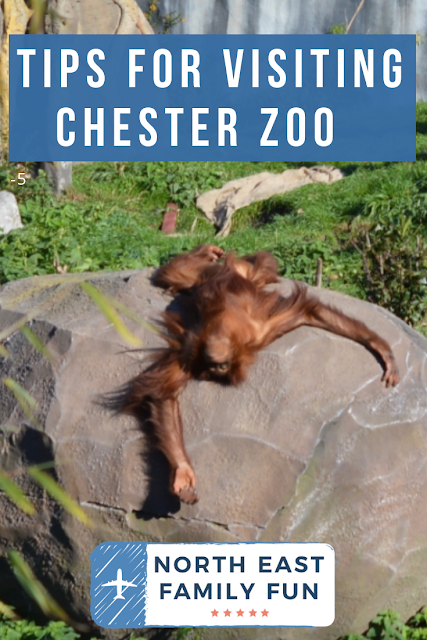 Tips for Visiting Chester Zoo from Newcastle